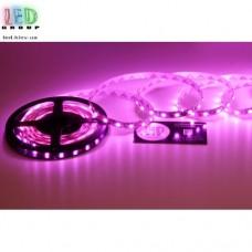 Светодиодная лента 12V, 5050, 60 led/m, 12W, IP20, розовый. Гарантия - 12 месяцев