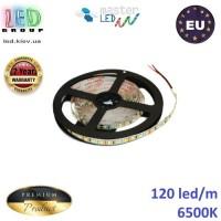 Светодиодная лента master LED, 12V, SMD 2835, 120 led/m, IP20, 1080Lm, холодный белый 6500К, Premium. Гарантия - 2 года.